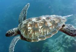 Загадочная фауна острова Бали