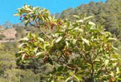 Флора и фауна Кипра